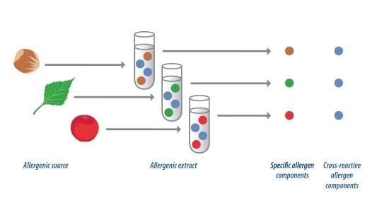 Reactividad cruzada de anticuerpos